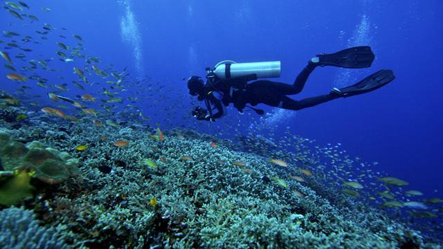 西岛潜水——高性价比