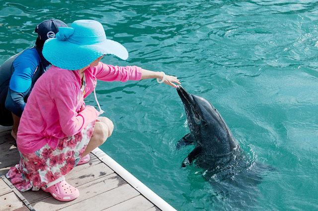 分界洲岛潜水——体验海豚戏水