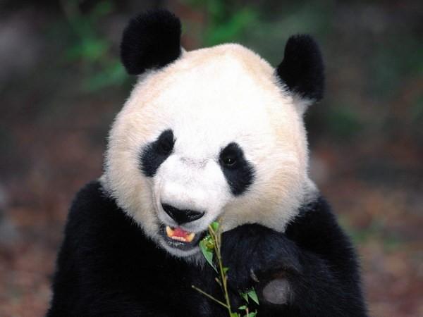 熊猫繁育研究基地